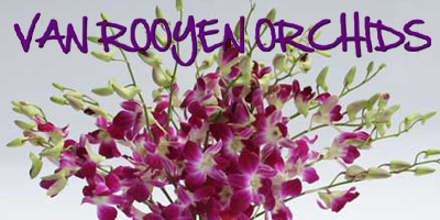 Van Rooyen Orgide�